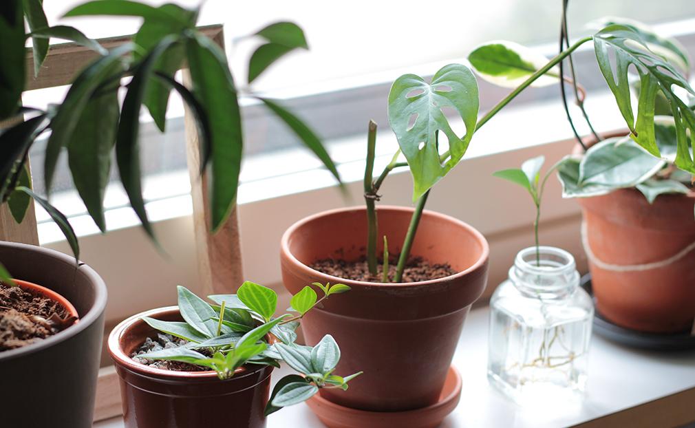 kasveja ikkunalaudalla