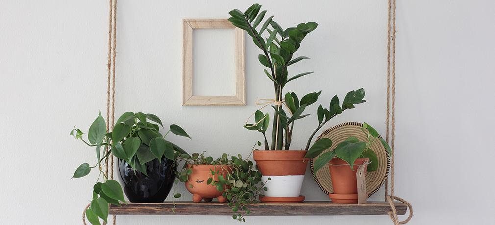 kasveja pidikkeissä, ruukuissa ja hyllyissä.