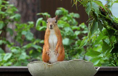 orava ruukussa