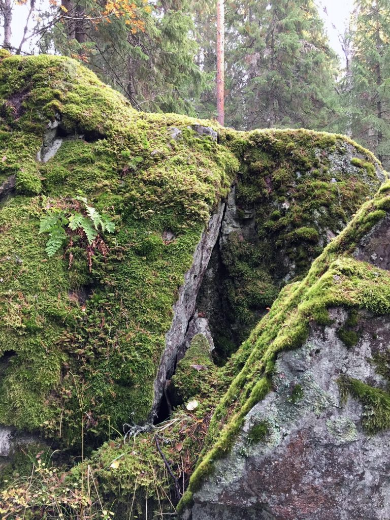 Paljas kivipinta kelpaa sammalien kasvualustaksi