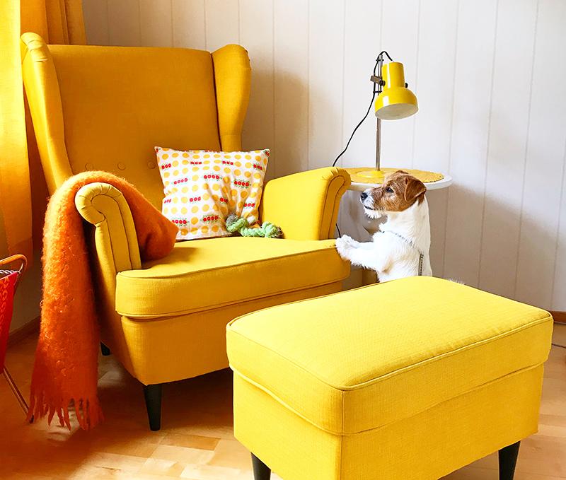 värit keltainen tuoli ja Tilda-terrieri